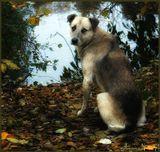 осень, грусть, одиночество, собака, берег, озеро