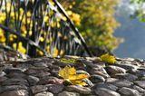 Парк Кузьминки осень мост