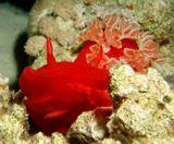 подводное фото, египет