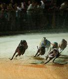 Вьетнам.Традиционное развлечение - собачьи бега, проводятся официально, делаются ставки. Все остальные азартные игры (казино и т.п.) - вне закона. Когда то у нас в Союзе было аналогично, но были разрешены ипподромы...