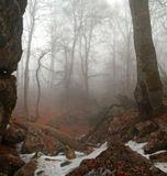 Тиссовое ущелье находящееся в восточной части нижнего плато Чатыр-Дага. Крым. Март месяц. Панорама из двух вертикальных кадров