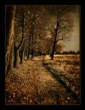осень аллея липы