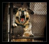 """из серии """"Про жизнь собак приюта"""""""