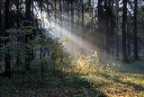 Прогулки по Звенигородскому лесу.