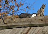 коты, коломенское, сиеста,крыша, лень