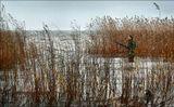Ладожское озеро,охотник