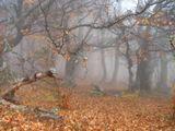 Буковый лес осеннего Крыма.Снимая бревно на переднем плане пытался создать перспективу фотографии.