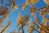 в октябре, солнечный день на сопках Монголии, лиственный лес