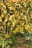 В лесу березы с кленами встречают нас поклонами....NDV