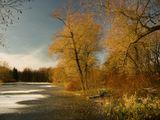 Лед Снег Растительность Осень