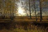 По осени в лесу так много света –как будто солнышко сияет с веток.