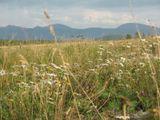 Полевые цветы на фоне горного хребта Зигальга.