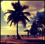 palm, ocean, sand