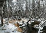 Еще ноябрь, но тайга уже примеряет зимние наряды :)Бурятия.