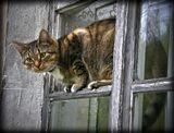 И на прохожих с высока гляжу.окно осень природа кошка животные