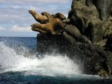 О. Монерон Сивучи прыгающие в воду