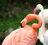 Hong Kong, октябрь 09г. Ocean park. Фламинго.