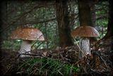 лес грибы природа осень подберезовики