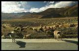 фотографировал из движущейся машины. Светлое пятно слева от центра - пыль, поднятная вихрем ... где-то в Тибете