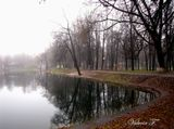 Фото сделано в пасмурную,слегка туманную погоду. г.Королёв