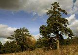 пейзаж осень сибирь кемерово сосновый бор