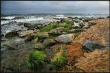 Трава, растущая прямо у воды- это совсем не характерно для Байкала! Обычно штормовые волны не только все вычищают, сметая даже камни, но и разрушают берега... ---------------  Август месяц на Байкале. Во время шторма.