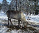 Ruka_Kuusamo.Finland