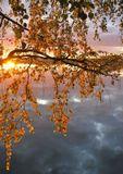 ветви, берёза, пруд, осень, Урал