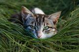 …Не шалю, никого не трогаю, починяю примус, недружелюбно насупившись, проговорил кот, и еще считаю долгом предупредить, что кот древнее и неприкосновенное животное… М. Булгаков