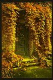 виноград, вход, город, гранж, дверь, дом, желтый, занавес, красный, лестница, лист, обвить, объятия, осень, питер, растение, санкт-петербург, сезон, сказка, ступенька, фактура, цвет, яркий,