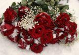Подмосковье. Первый снег. Розы