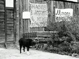 собака сено молоко навоз ферма деревня