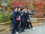 На заднем  плане знаменитые японские красные клены. Чтобы их увидеть своими глазами, в Японию надо ехать в ноябре. Если, конечно, Вы уже не потратили  денежки в апреле на созерцание  цветущей сакуры.