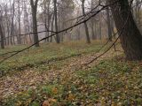 Осень, природа.