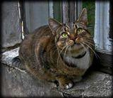 кошка окно природа животные