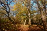 Деревья, листья.