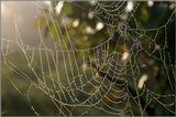 Роса на паутине осенним туманным утром.