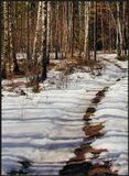 Утренняя прогулка по весеннему лесу...