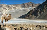 При громадном населении Китая эта территория удивительно пустынна.