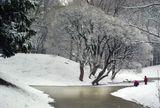 Зима Снег Лёд Растительность