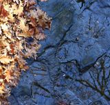 Дно, листья, камни,осень