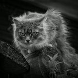кошка  Pentax K10D