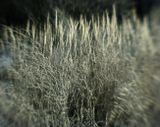 Зима трава монокль