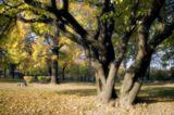 В Коломенском есть места, на которые взираю с постоянным восхищением... но никак не получается эту красоту запечатлеть... отразить свой взгляд, свое ощущение... Они, словно своеобразный магнит, притягивают меня с камерой (без которой, пожалуй, я в Коломенском не появляюсь)... И эти деревья с переплетенными стволами - одно из таких мест... Композиционно хочется кропнуть справа 1-2 см. Но не могу решить, нужно ли там пятно неба или нет... :) Буду рад критике!