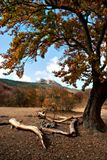 Крым. поляна Ман. Осень 2009ю