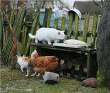 Учуяли лакомство животинки, планы вынашивают... :)Хмурым днем декабрьским.