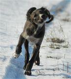 С Матильдой (порода тазы - казахская борзая) многие уже знакомы: http://www.lensart.ru/picture-pid-2a3a7.htm?ps=18Но уж больно приглянулась собачка, и я не удержался, чтобы запостить еще один ее снимок.