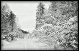 зима,лес, Архангельск , пейзаж