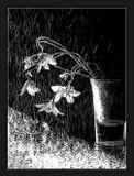 черно-белый,монохром,природа,букетик,колокольчик,дождь,влага,осадки,лето