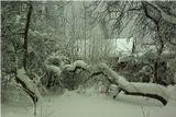 Тихая и снежная зима в Ленинградской области